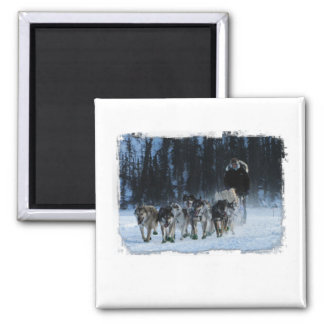 Yukon Quest Dogsled Team 2 Inch Square Magnet