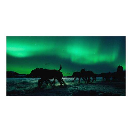 Yukon Quest Magic Photo Card