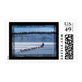 Yukon Quest Team Postage Stamp