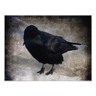 Yukon Raven Grunge Photo