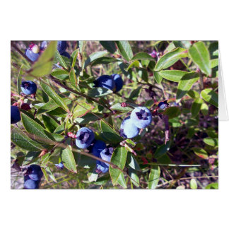 Yummy Blueberries Card
