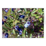 Yummy Blueberries Greeting Card