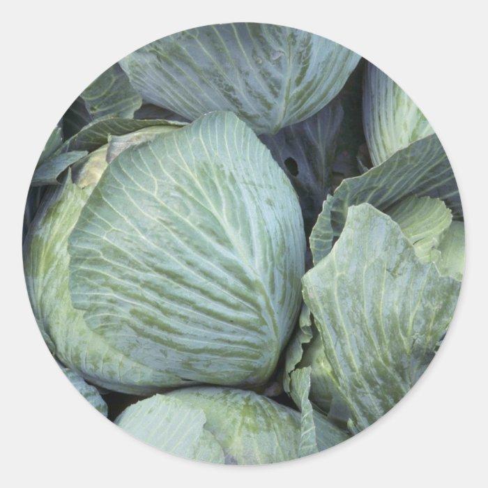 Yummy Cabbage Classic Round Sticker