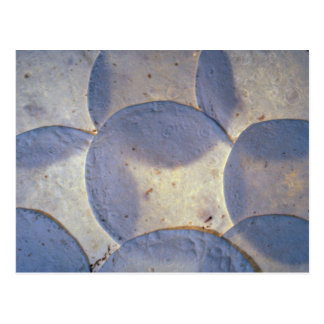 Yummy Tortilla shells Post Card