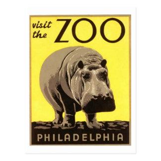 Z00 - Hipopótamo Postales