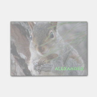 Z Cute Squirrel With Peanut Personalized Post-it® Notes