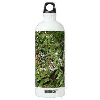 Z Neem Design Aluminum Water Bottle