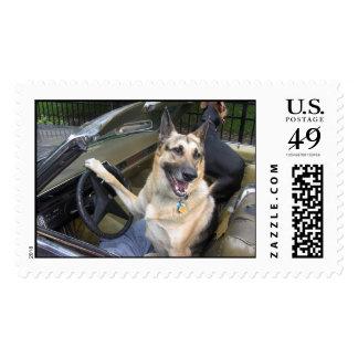 Zach & Zorro Postage Stamp