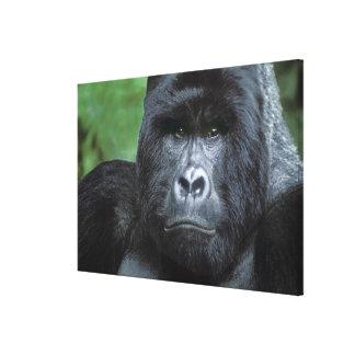 Zaire, parque nacional de Virungas. Retrato de Impresiones En Lona