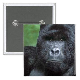 Zaire, parque nacional de Virungas. Retrato de Pin Cuadrado