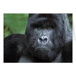 Zaire, parque nacional de Virungas. Retrato de Tarjeta De Felicitación