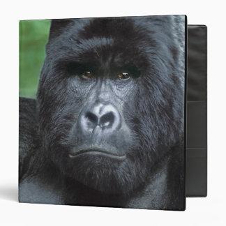 Zaire, Virungas National Park. Portrait of Binder