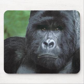 Zaire, Virungas National Park. Portrait of Mouse Pad