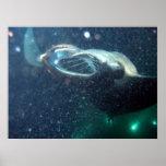 Zambullida con los rayos de Manta - la isla grande Posters
