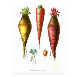 Zanahorias del vintage vegetarianas tarjetas postales