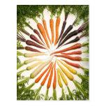 Zanahorias multicoloras del arco iris