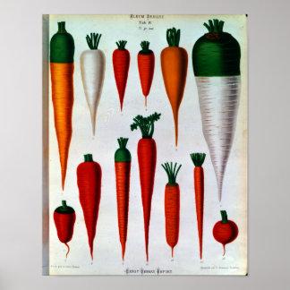 Zanahorias Posters