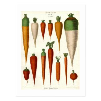 Zanahorias Postal