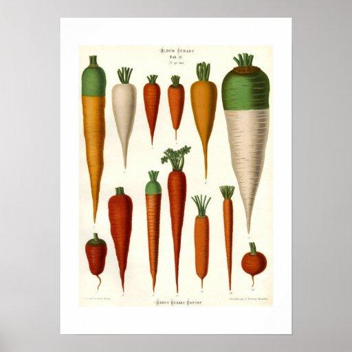 Zanahorias Poster