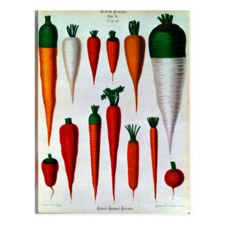 Zanahorias Tarjeta Postal