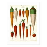 Zanahorias Tarjetas Postales