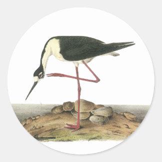Zanco Negro-Necked, Juan Audubon Pegatina Redonda