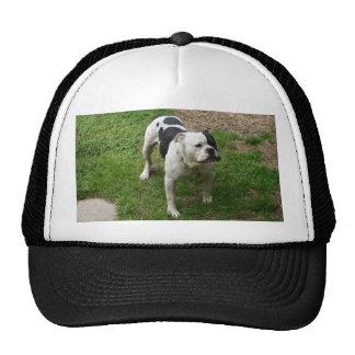 Zane - American Bulldog! Trucker Hat