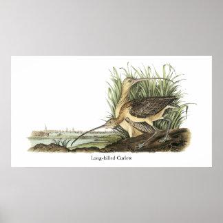 Zarapito longirrostro, Juan Audubon Posters