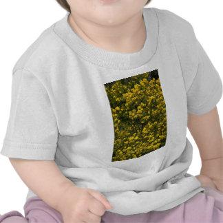 Zarzo de oro camisetas