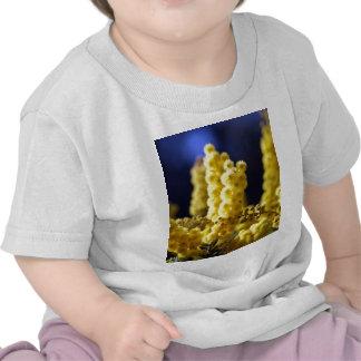 Zarzo Camiseta