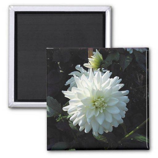 zazzle_white_flower refrigerator magnets