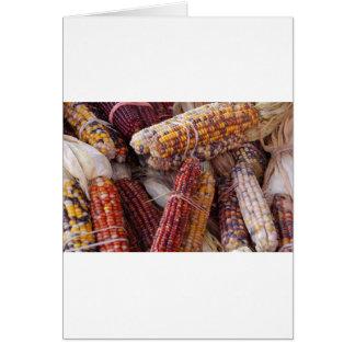 Zea mayos del maíz del maíz indio felicitaciones