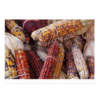 Zea mayos del maíz del maíz indio tarjetas postales