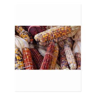 Zea mayos del maíz del maíz indio postal
