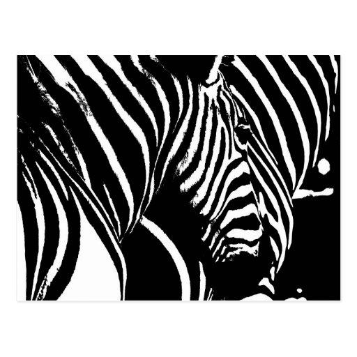 Zebra01 Tarjetas Postales