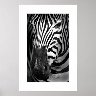 Zebra #1 poster