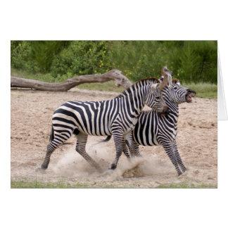 zebra-2-10 card