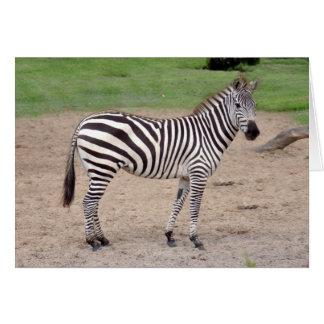 zebra-2-12 card