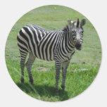 zebra-2-13 pegatina redonda