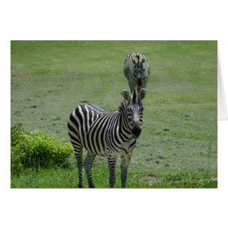 zebra-2-1 card