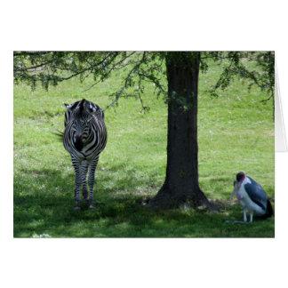 zebra-2-2 card