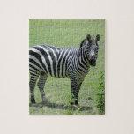zebra-2-6 puzzles con fotos