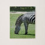 zebra-2-7 puzzles