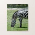 zebra-2-7 rompecabeza con fotos