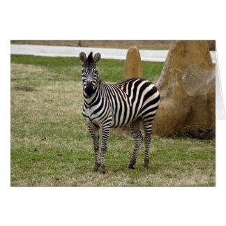 zebra-2-8 card