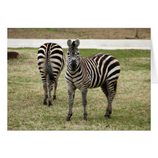 zebra-2-9 card
