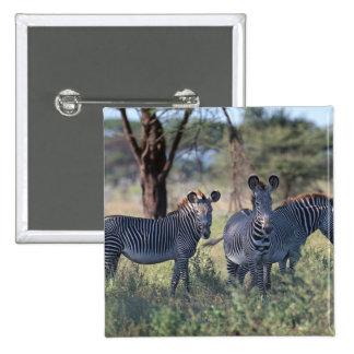 Zebra 2 2 inch square button