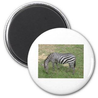 Zebra 2 Inch Round Magnet