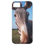 zebra 2 iPhone 5 cases