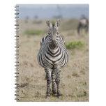 Zebra 2 notebooks